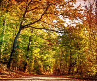 Pathway Through Autumn Leaves
