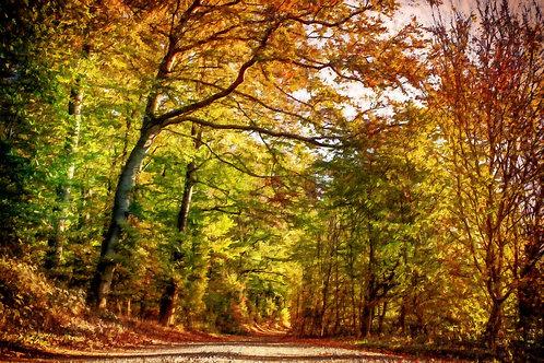 """Pathway Through Autumn Leaves"" Fine Art Print"