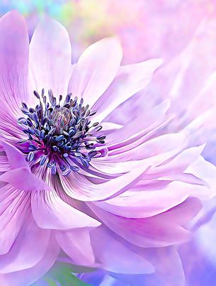 Wispy Purple Anemone