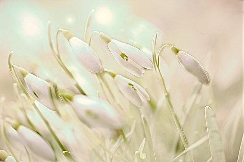 """Enchanting Snowdrops"" Fine Art Print - 12"" x 16"""
