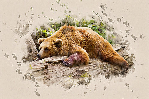"""""""Bearly There"""" Fine Art Print - 12"""" x 16"""""""