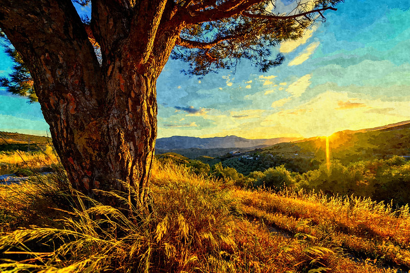 """Gnarled Tree at Sunset"" Fine Art Print - 12"" x 16"""