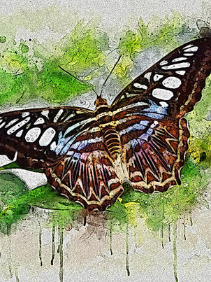 Outstretched Wings