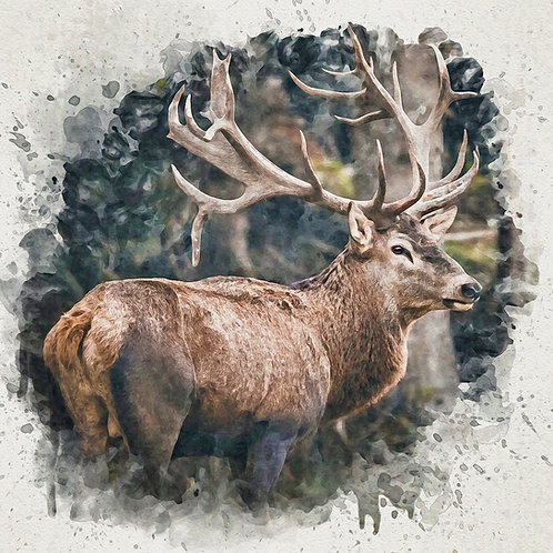 """Forest Prince"" Fine Art Print - 12"" x 12"""