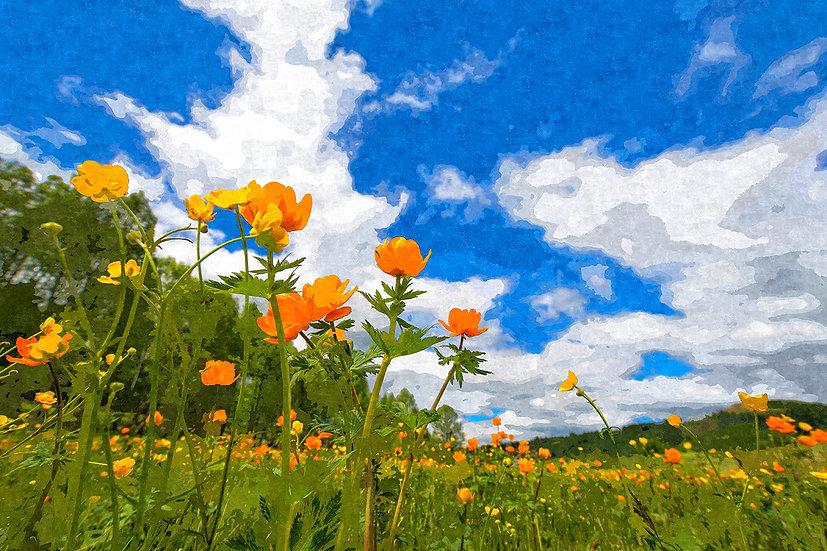 """California Poppies Under Blue Skies"" Fine Art Print - 12"" x 16"""