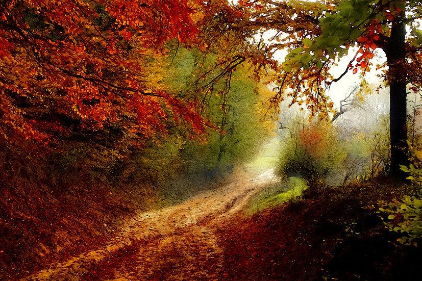 """Autumn Forest Edge"" Fine Art Print - 12"" x 16"""