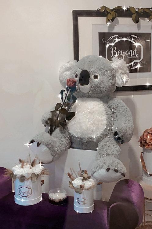 Koala Bär mit 1 Infinity Stielrose