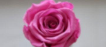 thumb_IMG_1203_1024_edited.jpg
