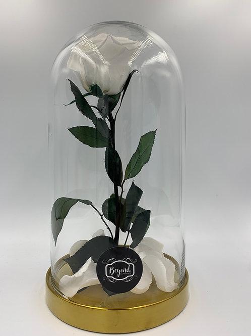 Die Rose der Schönen