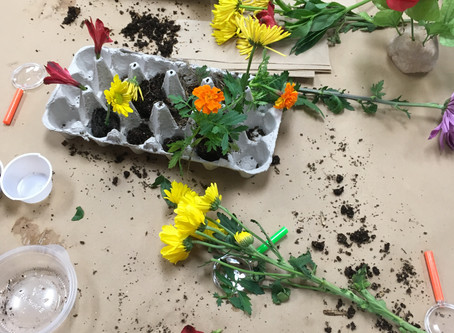 Flowers and Soil