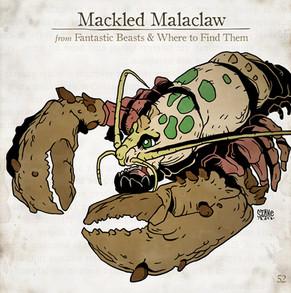 Mackled Malaclaw