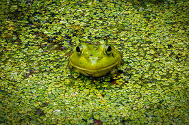 "Neil Zobler    ""Easy to Be Green"""
