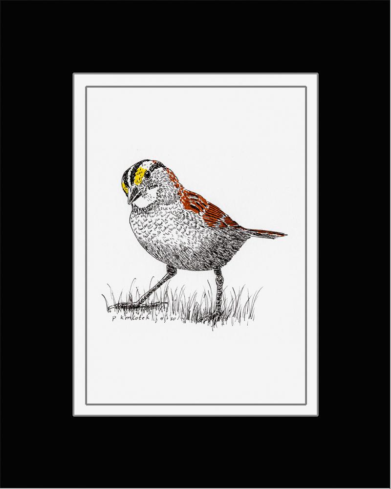 Paul Kmiotek - White-throated Sparrow