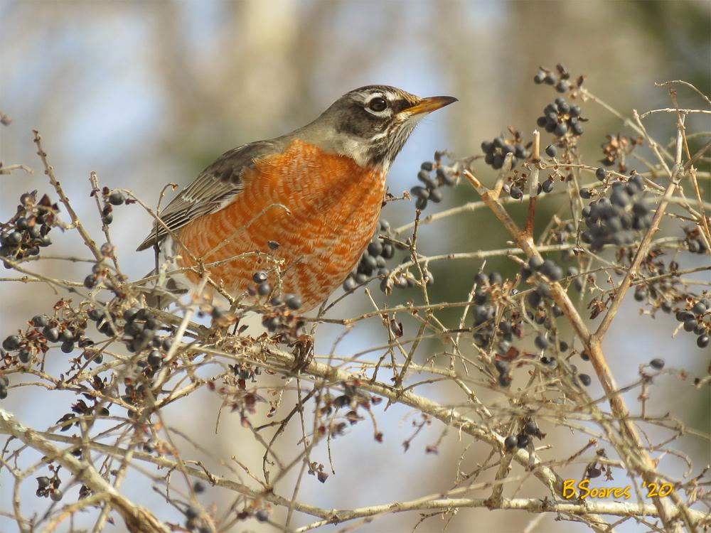 Barbara Soares- BirdTalk #2
