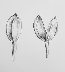 "Karina Sorensen   ""Seedlings"""