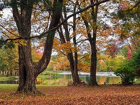 Linda T Hubbard   Autumn Tranquility   Photograph  16 x 20.jpg