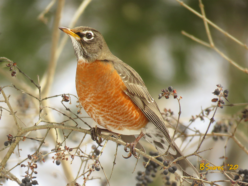 Barbara Soares - BirdTalk #1