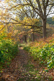 """Gary Stanford    """"Walking Along The Trail In Autumn"""""""