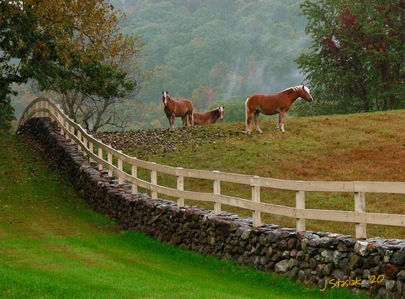 James Stasiak:  Three Horses