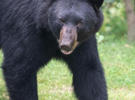 John Charles:  Friendly Bear