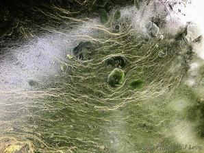 """Elisabeth J Levy    """"Algae Art-5"""""""