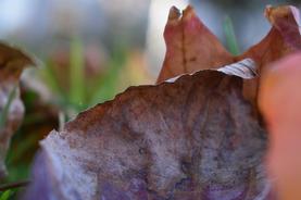 "Sarah Kwashnak    ""Fallen Leaves"""
