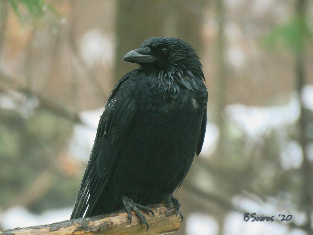 Barbara Soares - BirdTalk #4