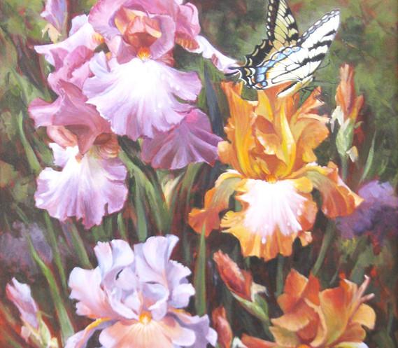 Irises & Swallotail