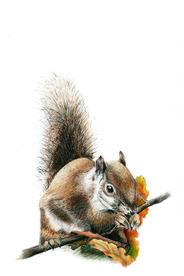 """Christina Maschke    """"Squirrel"""""""
