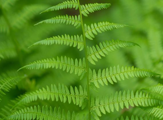 Justin Goodhart:  Green on Green