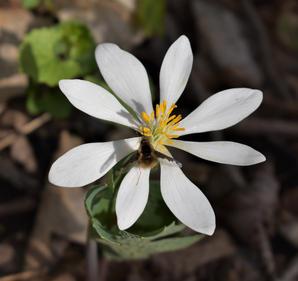 """Karen Golden    """"Pollinator II """""""