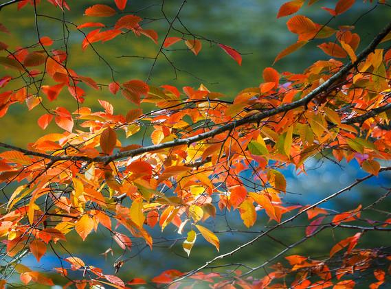 Glorious Fall Foliage