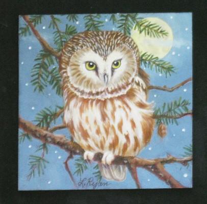 Moonlit Saw Whet Owl
