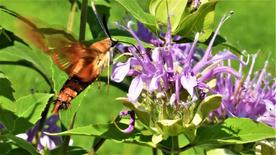 "Karen Golden    ""Pollinator I"""