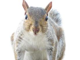"Masumi O'Donnell   ""Squirrel ala Avedon"""