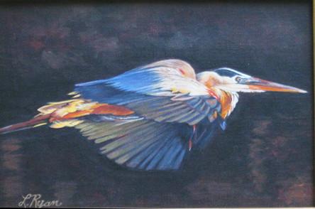 Blue Heron Sunset Flight