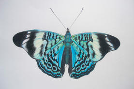 "Karina Sorensen   ""Blue Beauty"""