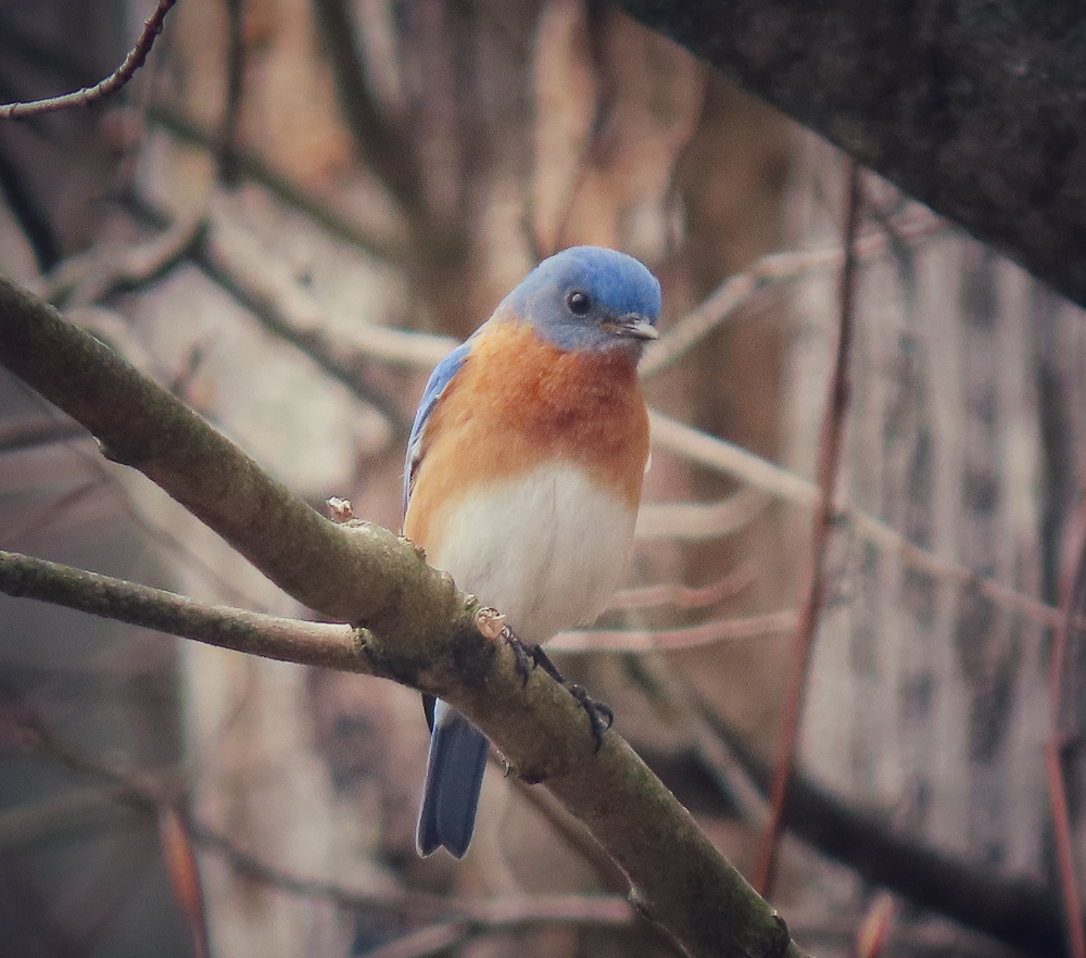 "Dawn O'Creene -Bluebird - ""Hope"""
