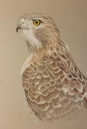 """Karina Sorensen   """"Hawk Ridge"""""""