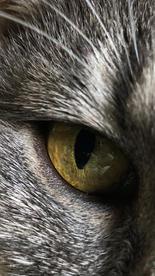 """Jim Stasiak    """"Cat's Eye"""""""
