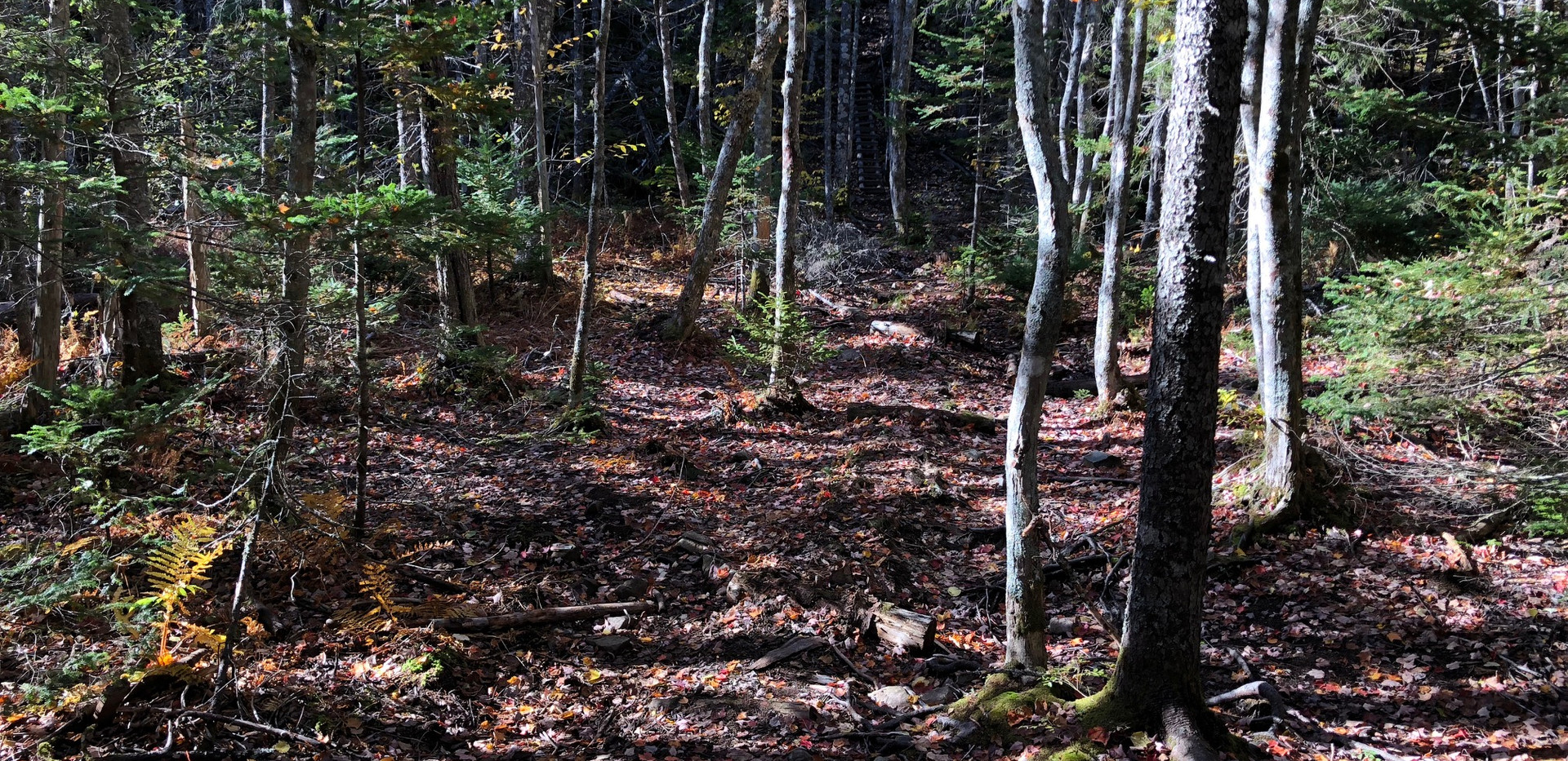 Can you see the trail?  Typical of many of the BMBCL trails in the fall