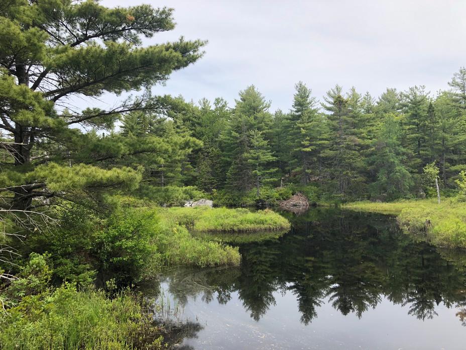 Richard Vinson, Susies Lake Pond - Beaver Lodge
