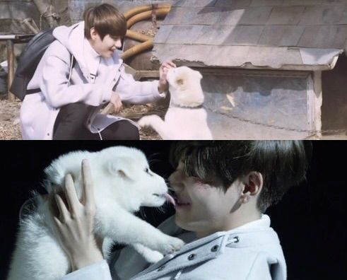 Bangtan BTS Begins Live Trilogy 2015 Wings short film Stigma V Kim Taehyung with white dog