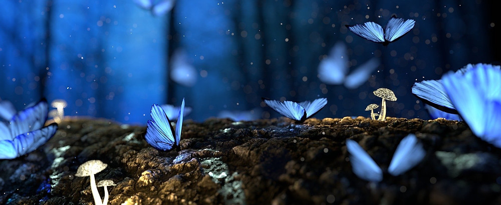 How to get published butterfly dream night shiny mushrooms blue pretty writers author