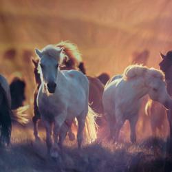 HORSES 8' X 8'