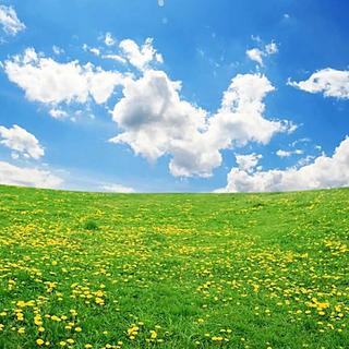 GRASS & SKY 10' X 10'