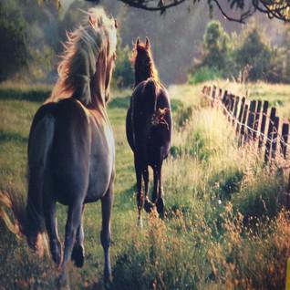 HORSES RUNNING 8' X 8'