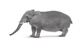 Marcus Vanderslice elepho