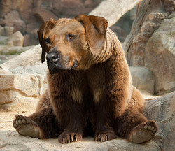 Steve Karum Grizzly the dog