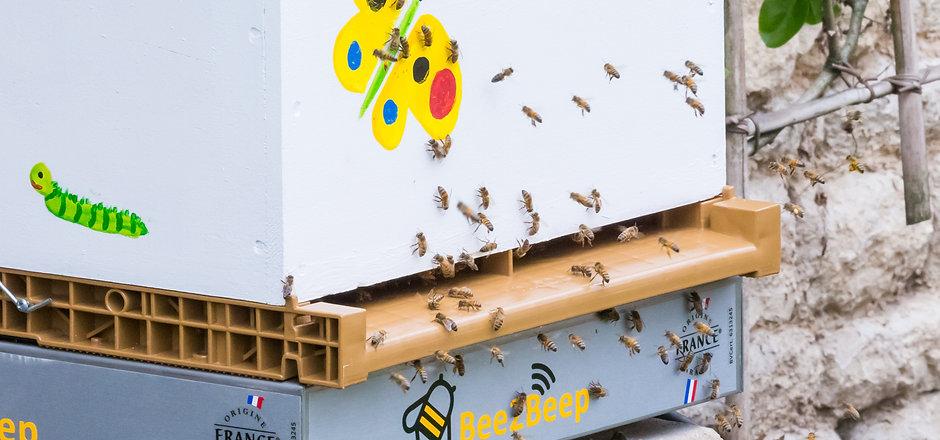 Louer Bee2Beep PRO